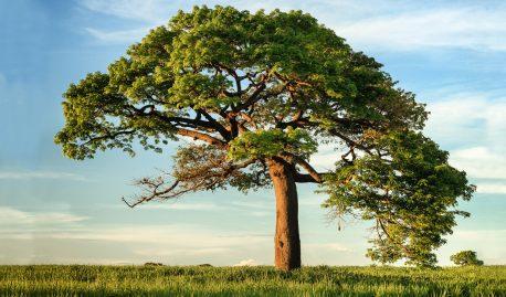 Целостное развитие в духовной практике