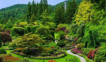 Вечнозеленый сад